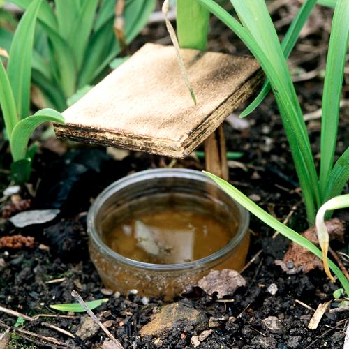 Lutter contre les limaces et escargots jardinage - Pieges a limaces fait maison a base de biere ...