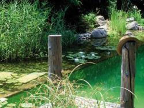 Bassin écologique : intérêt et prix d\'un bassin écolo