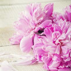 Où peut-on acheter des fleurs de Bach?
