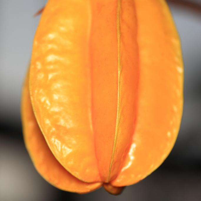 Averrhoa carambola Arkin (cultivar d'origine américaine : Floride)