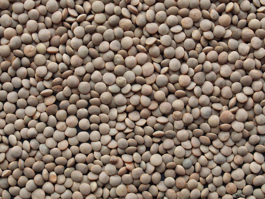 f3ff795f753c23 Lentille   planter et cultiver – Ooreka
