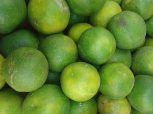 Plantation de la limonette