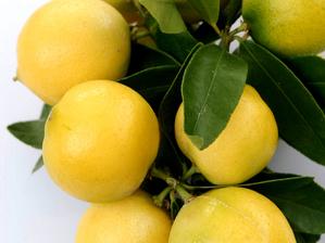 Culture et entretien de la limonette