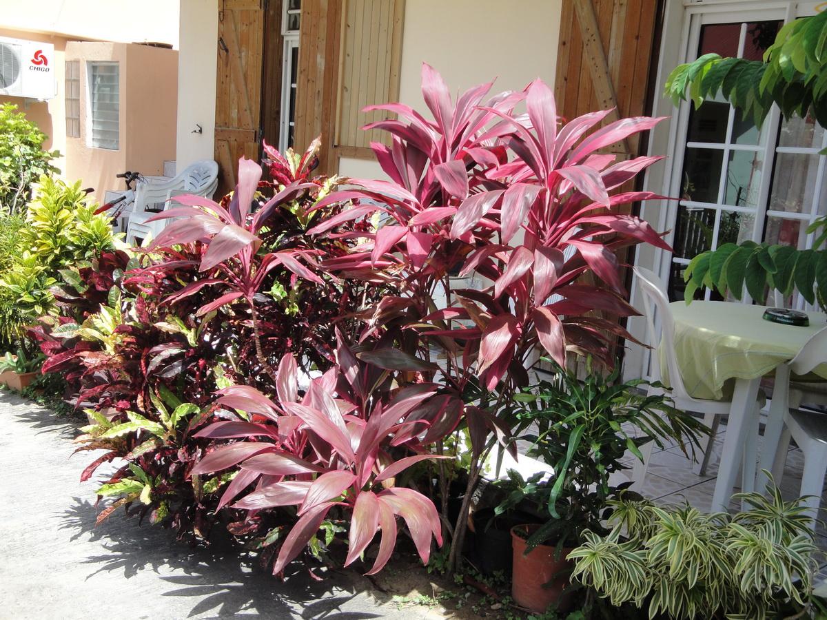 Cordyline planter et cultiver ooreka for Ou acheter plante interieur