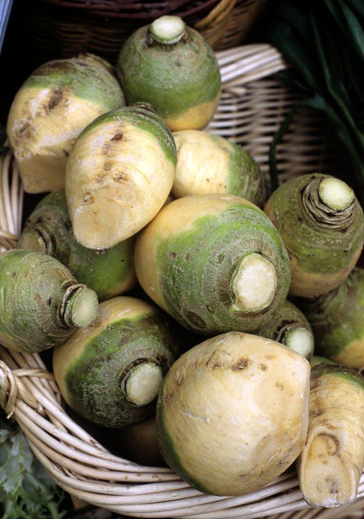 rutabaga   planter et cultiver  u2013 ooreka