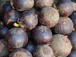 Multiplication du mangoustanier