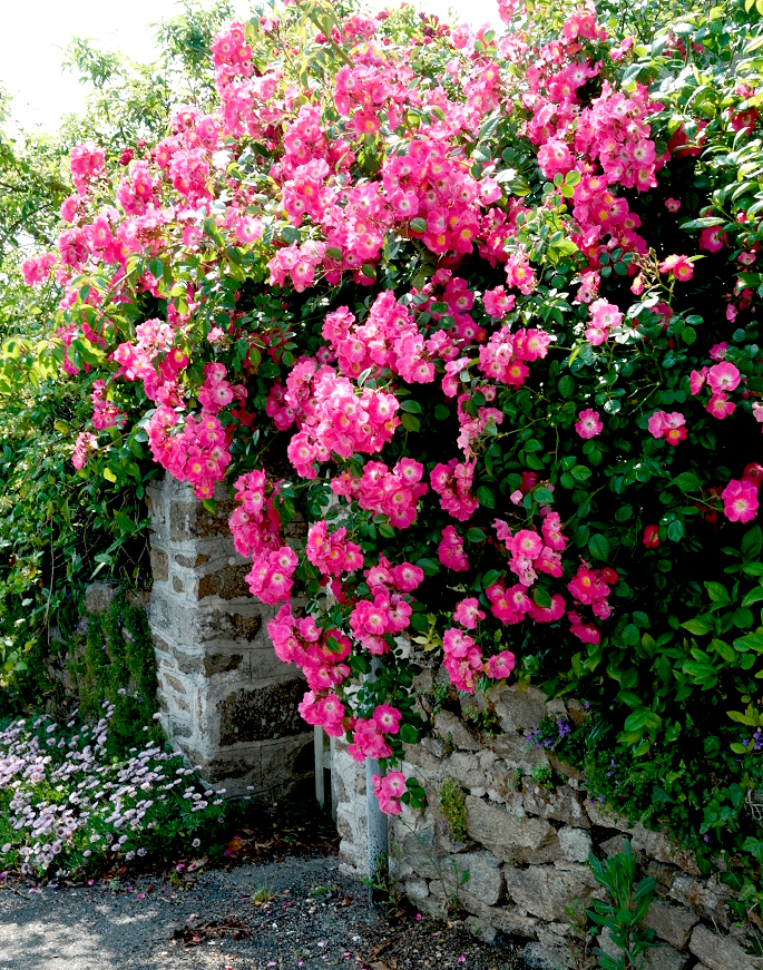 Entretenir un rosier en pot 28 images tous nos for Plantation beuh exterieur