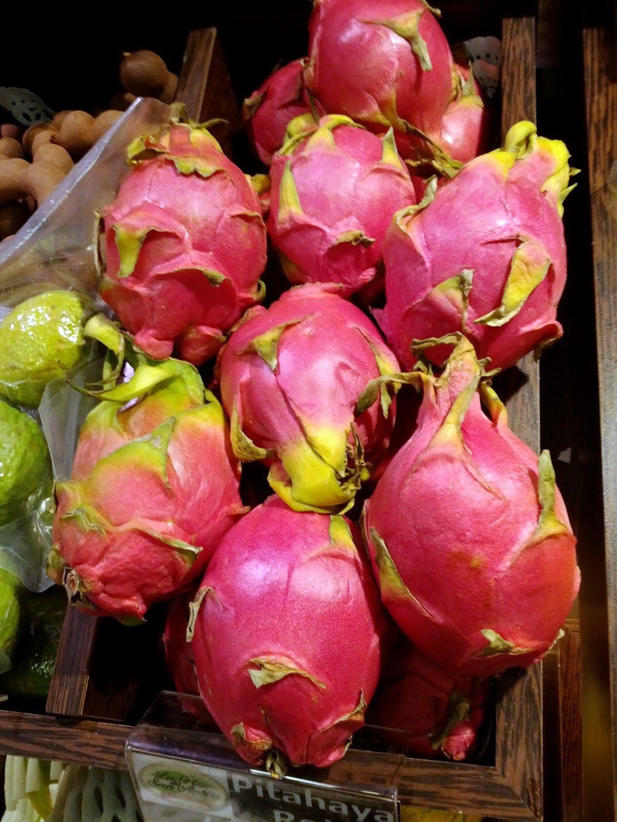 pitaya   planter et entretenir  u2013 ooreka