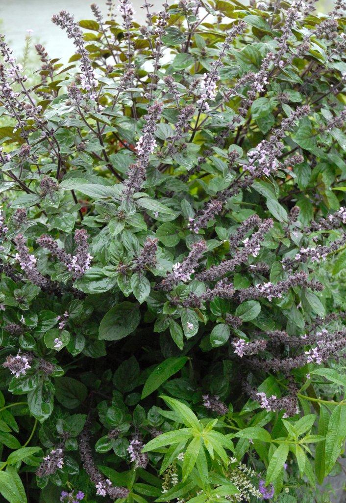 Superbe Pot Pour Plante Aromatique Interieur #4: 1ykoniz2z4w08k8c840k0ggc8-source-9229038.jpg