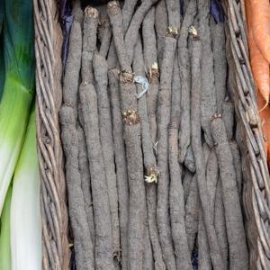 Scorsonère (Scorzonera hispanica) 'Géante noire de Russie'