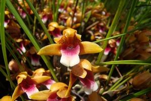 Plantation des <em>Maxillaria</em>