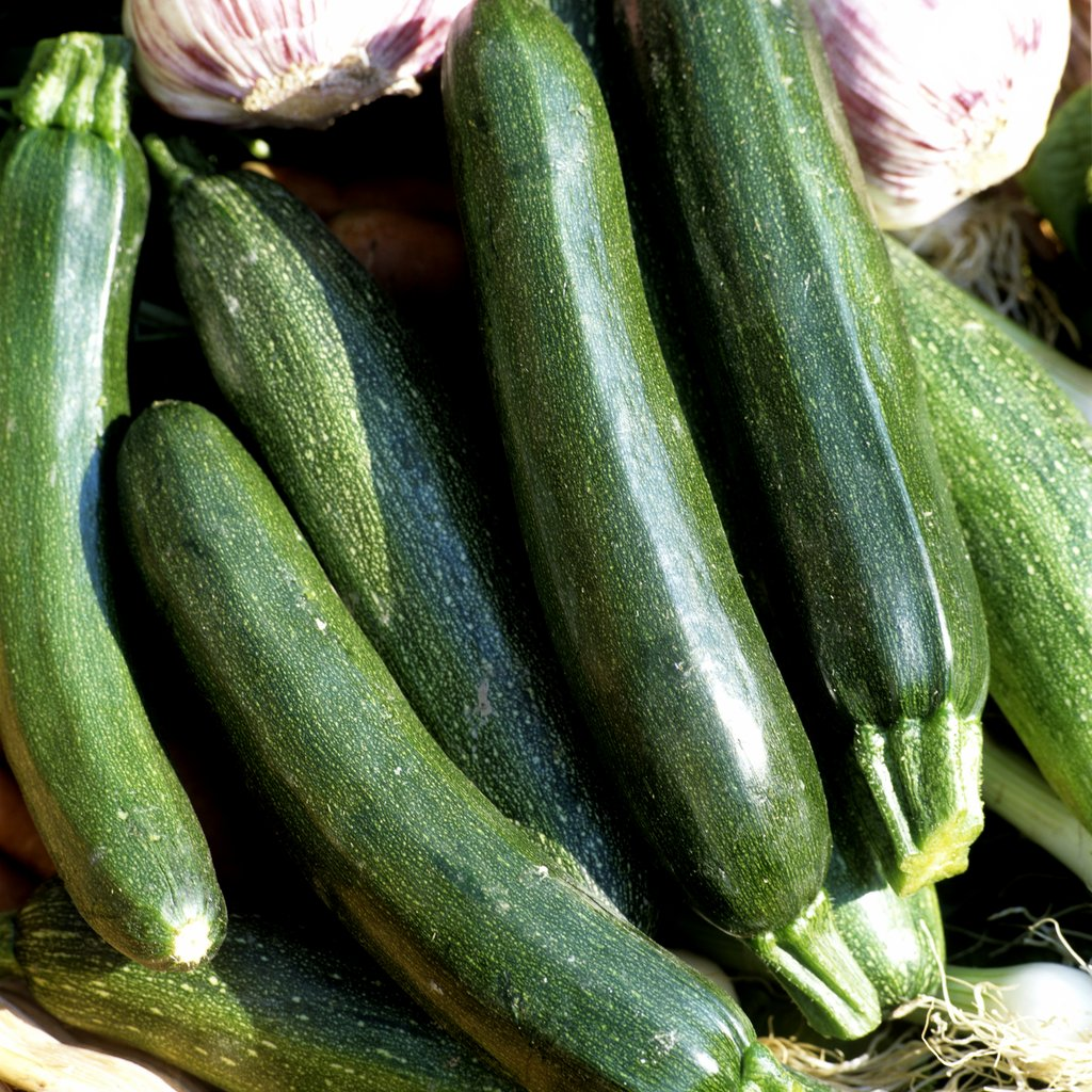 Courgette semer et planter ooreka for Type de plante