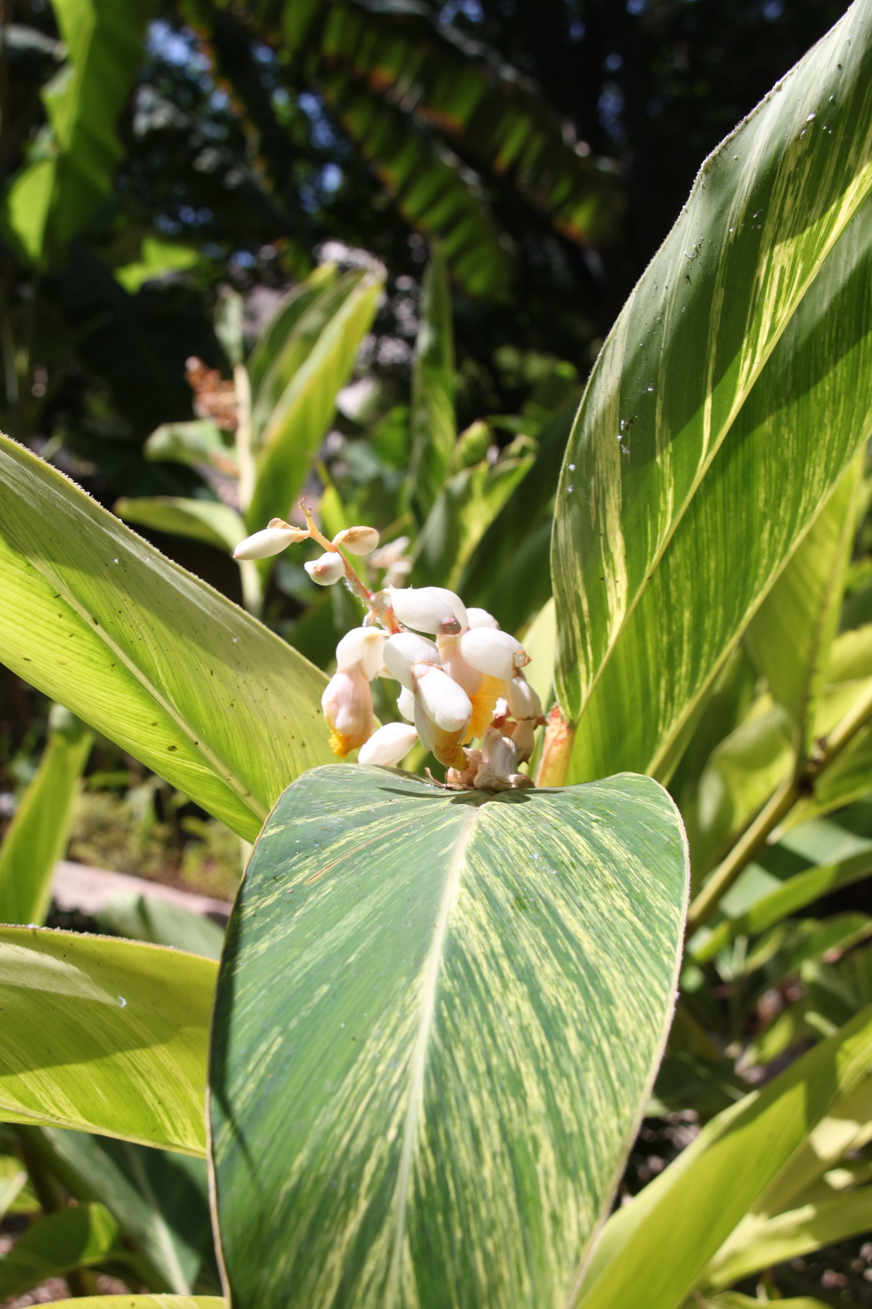 collier de fleur de squash datant