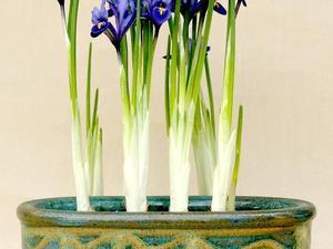 Culture et entretien de l'iris