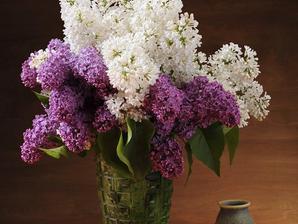 Culture et entretien du lilas