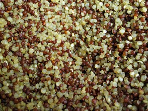 Multiplication du quinoa