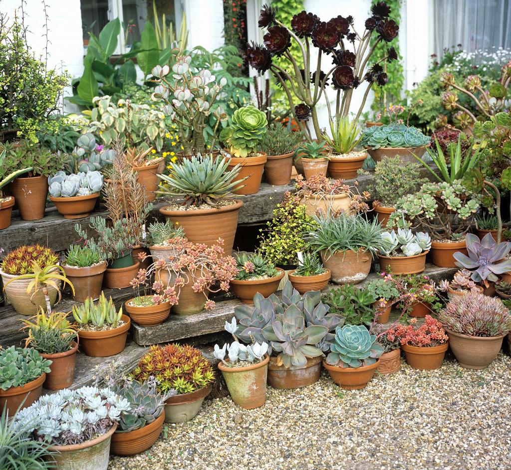 crassula planter et entretenir ooreka With modeles de rocailles jardin 2 crassula planter et entretenir ooreka