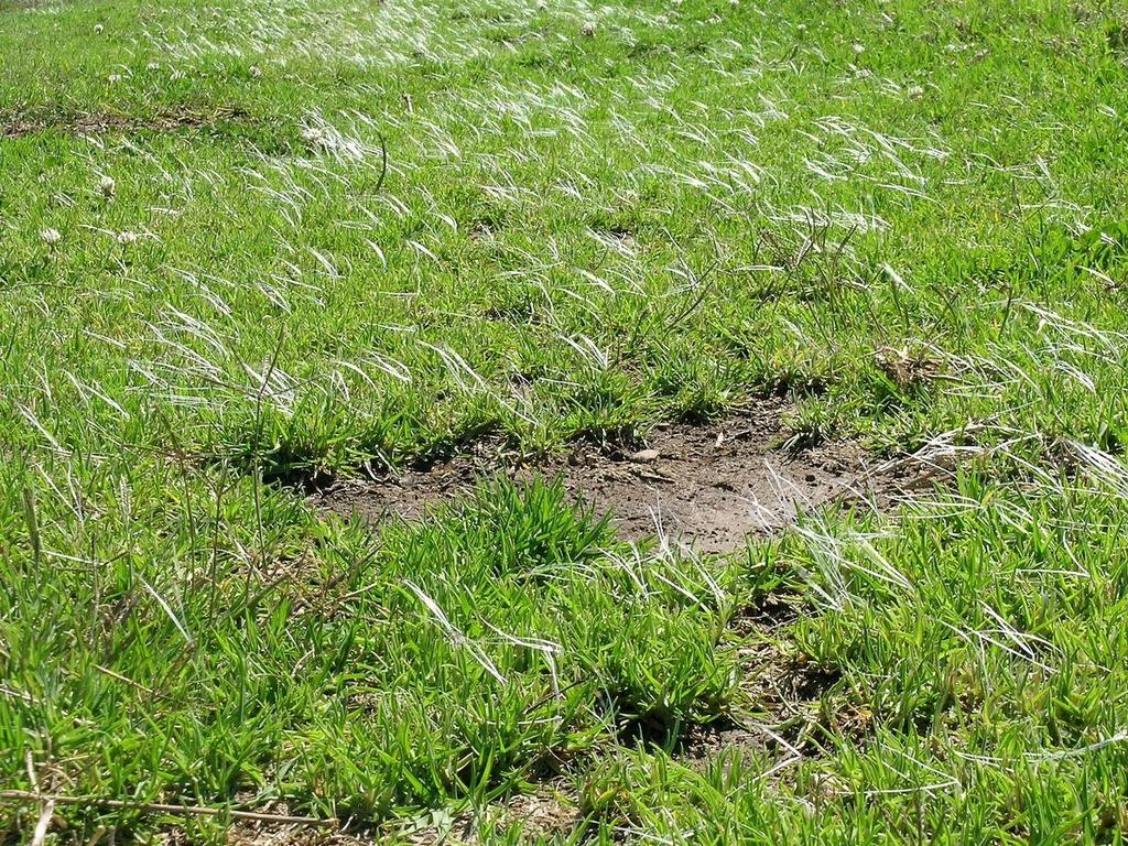 Kikuyu planter et semer ooreka - Niveler un terrain pour pelouse ...