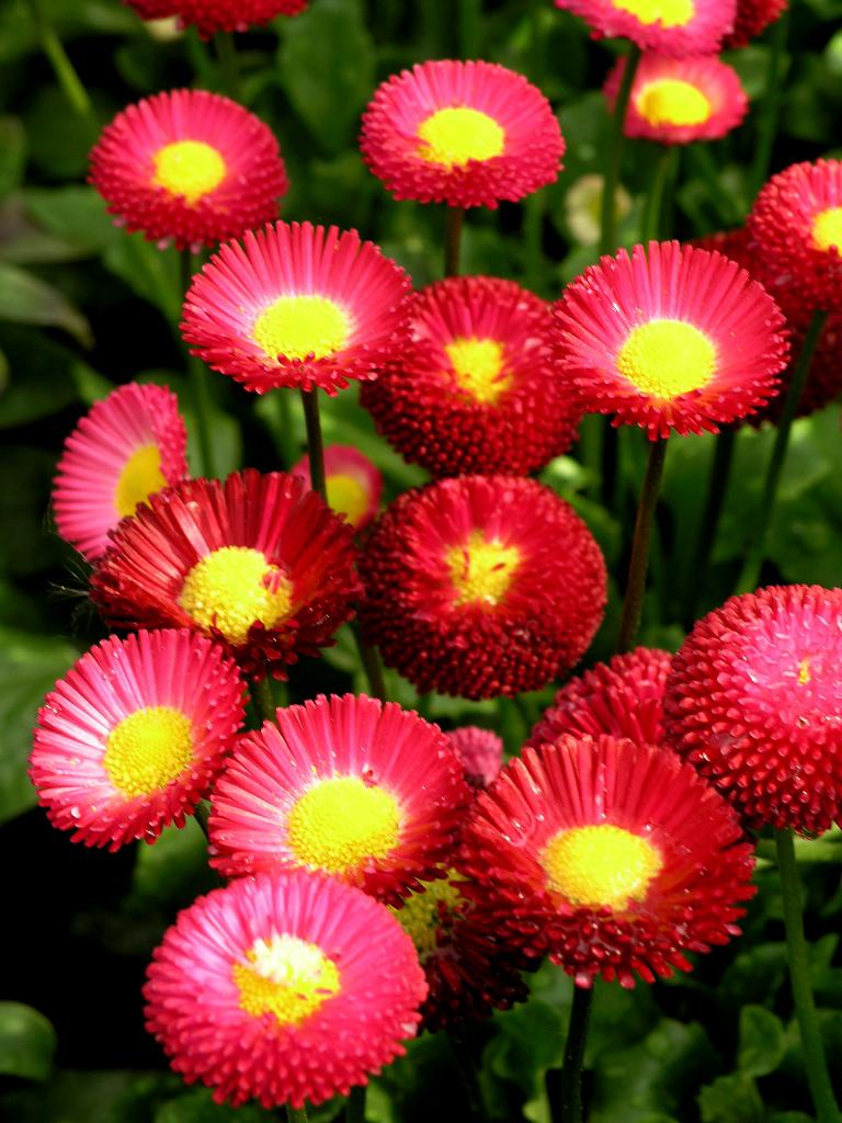 P querette planter et cultiver ooreka for Plante exterieur toute saison