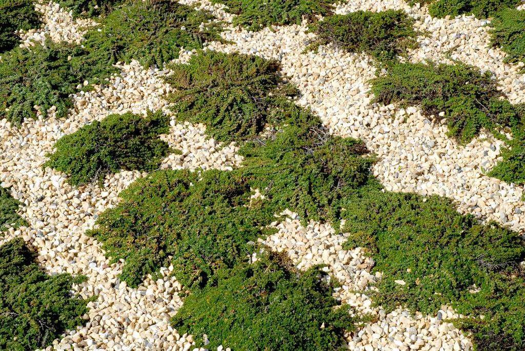 Serpolet planter et entretenir ooreka for Solde plante jardin