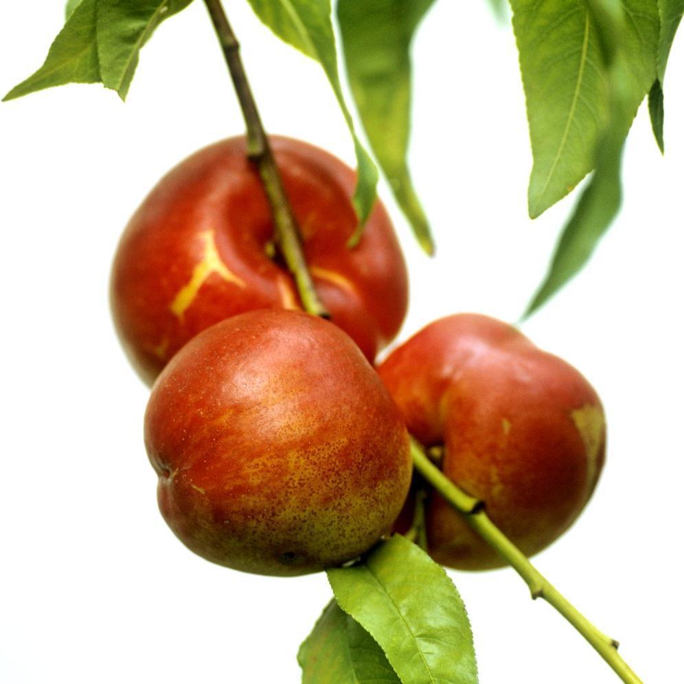 Nectarines 'Précoce de Croncels'
