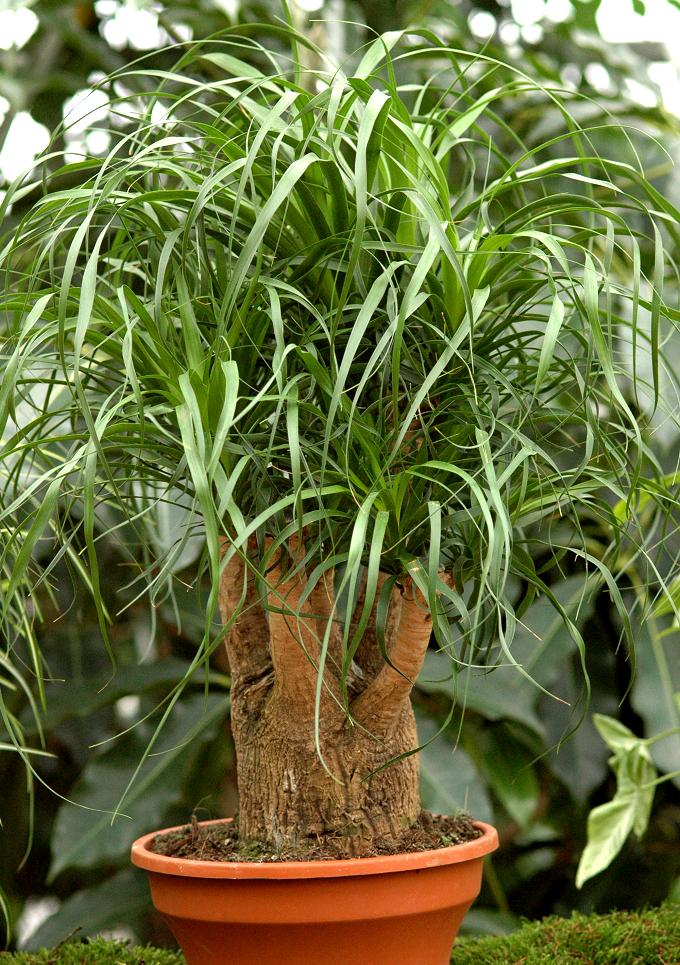 Plante fleurie d 39 int rieur liste ooreka plante for Plante interieur facile