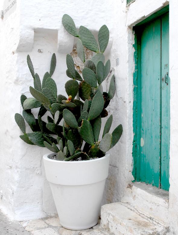 citronnier en pot entretien taille rempotage of tailler un citronnier en pot. Black Bedroom Furniture Sets. Home Design Ideas