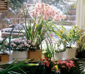 Plantation et semis des orchidées