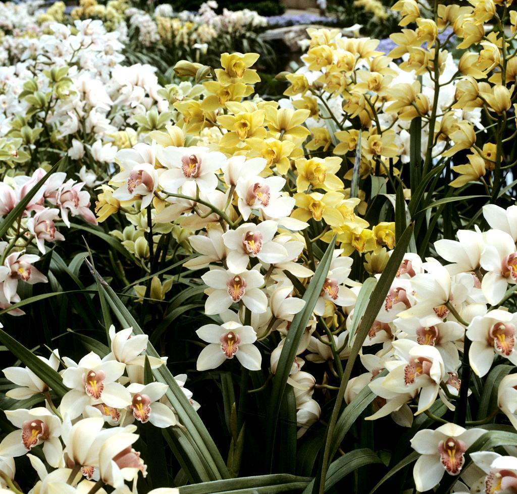 orchid es cultiver et entretenir ooreka. Black Bedroom Furniture Sets. Home Design Ideas
