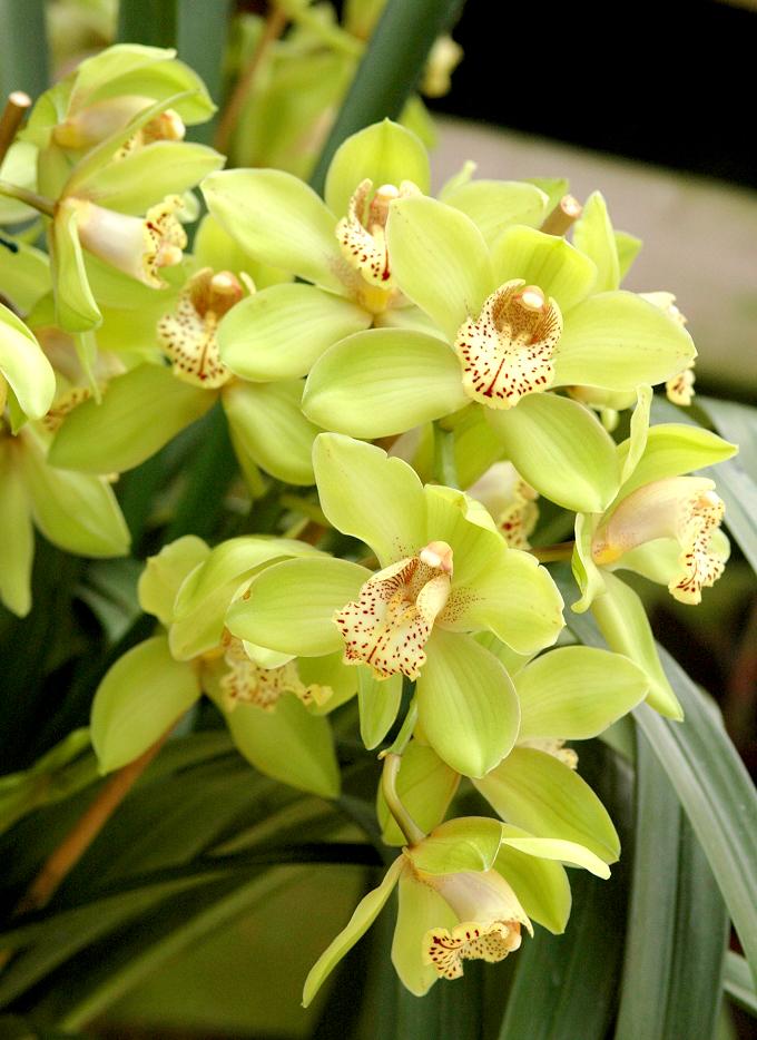 planter une orchidee en pleine terre