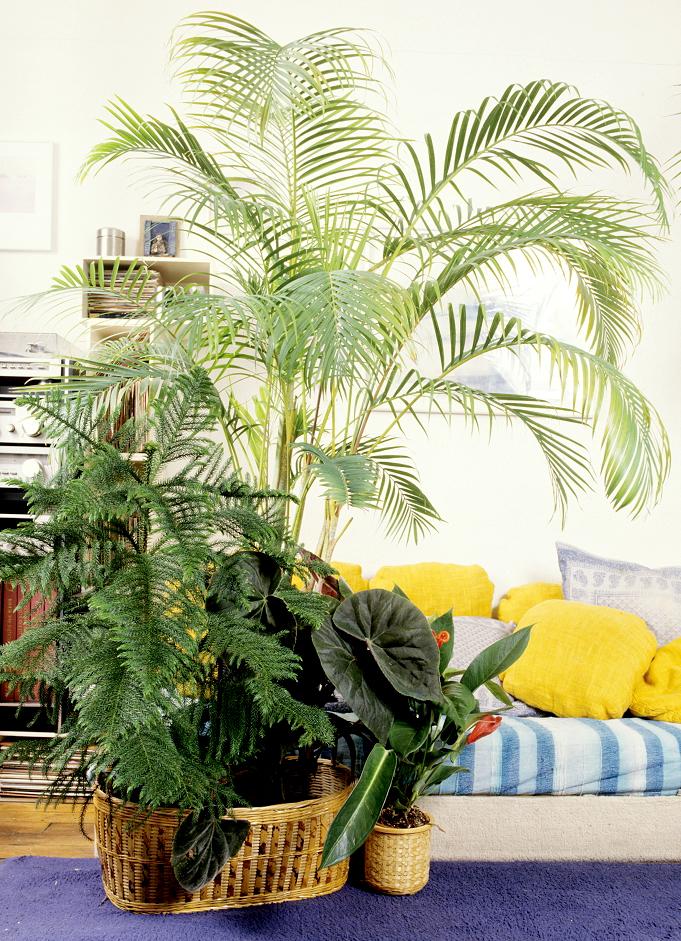 ar ca planter et cultiver ooreka. Black Bedroom Furniture Sets. Home Design Ideas