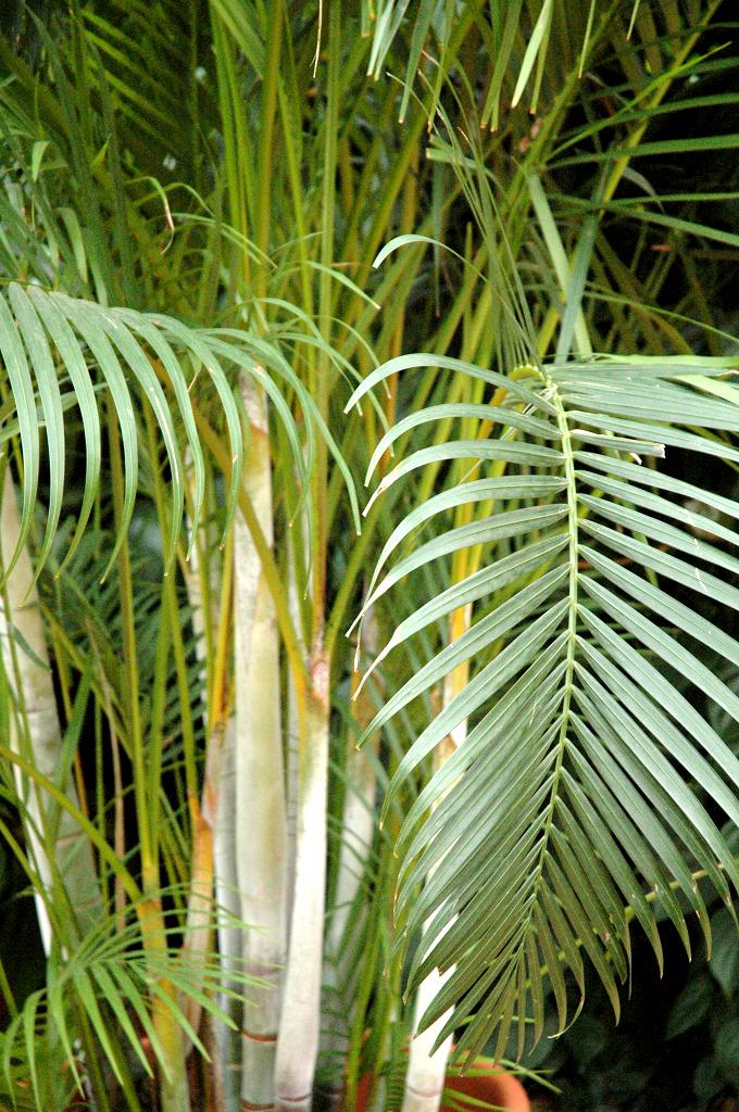 Ar ca planter et cultiver ooreka for Plante 150 maladies madagascar