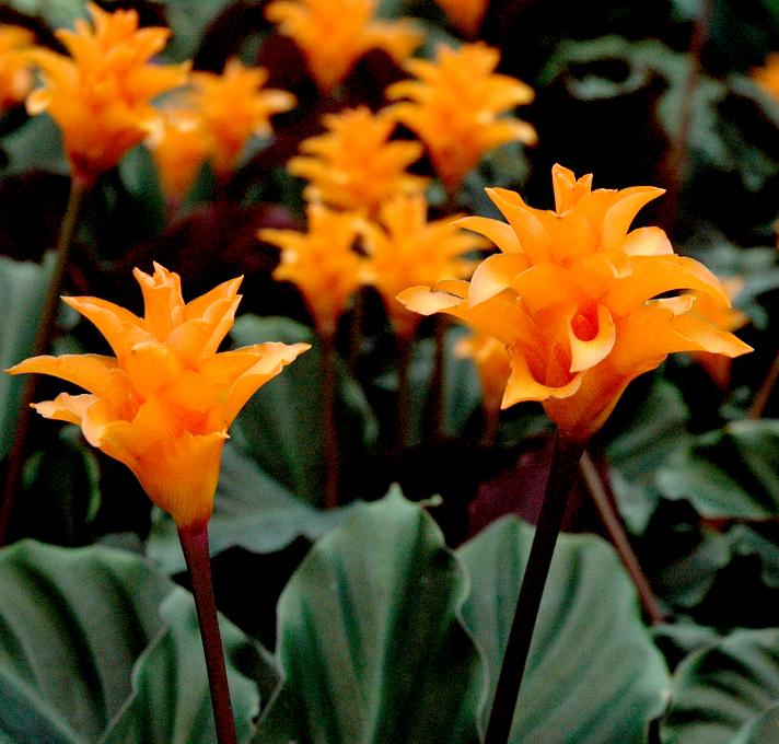 plante verte avec fleur orange