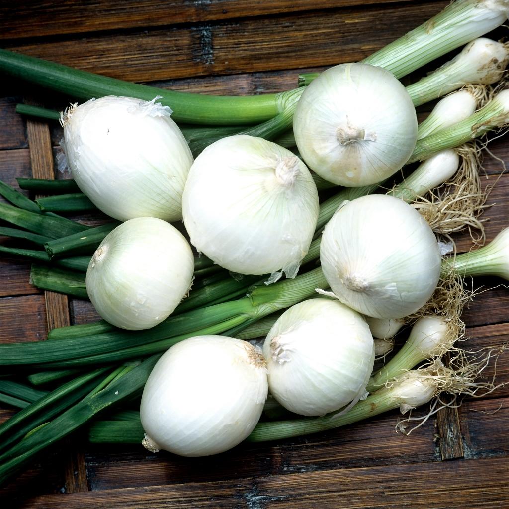 Oignons blancs 'De Barletta'