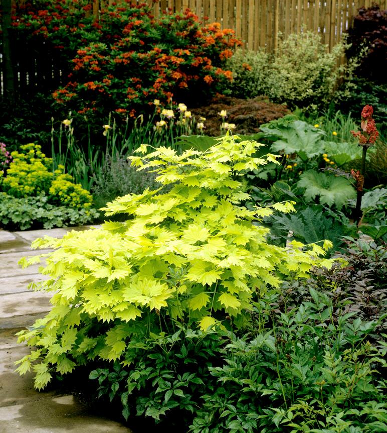 Exposition Soleil : La plante doit avoir du soleil direct toute la ...