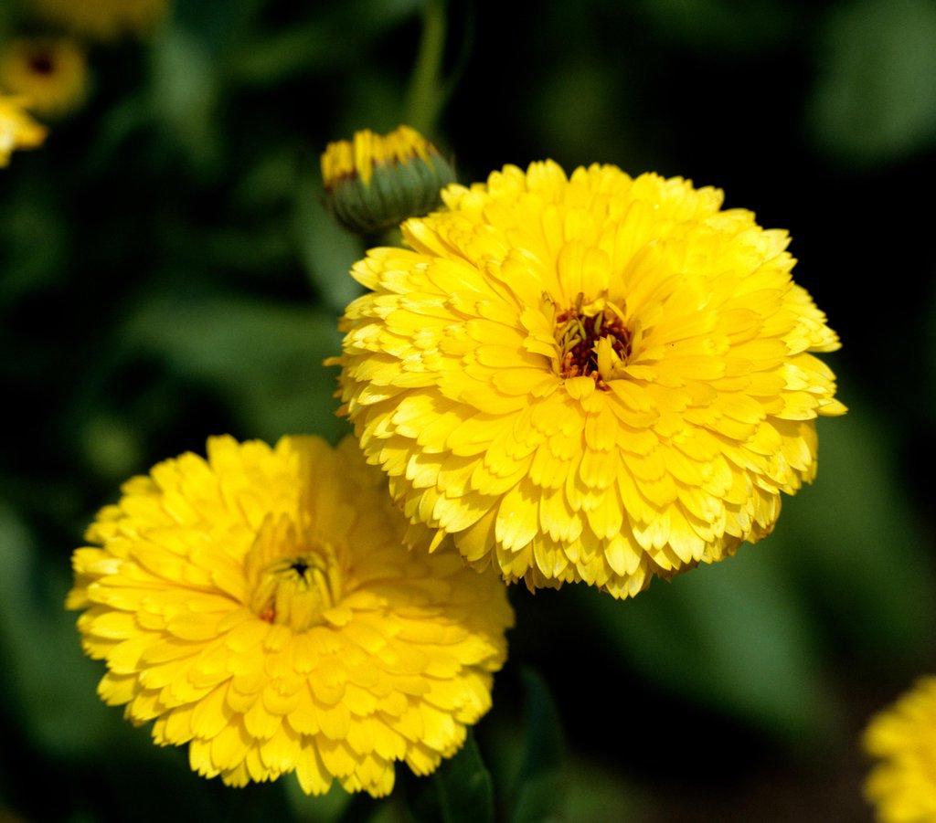 Souci : semer et cultiver – Ooreka
