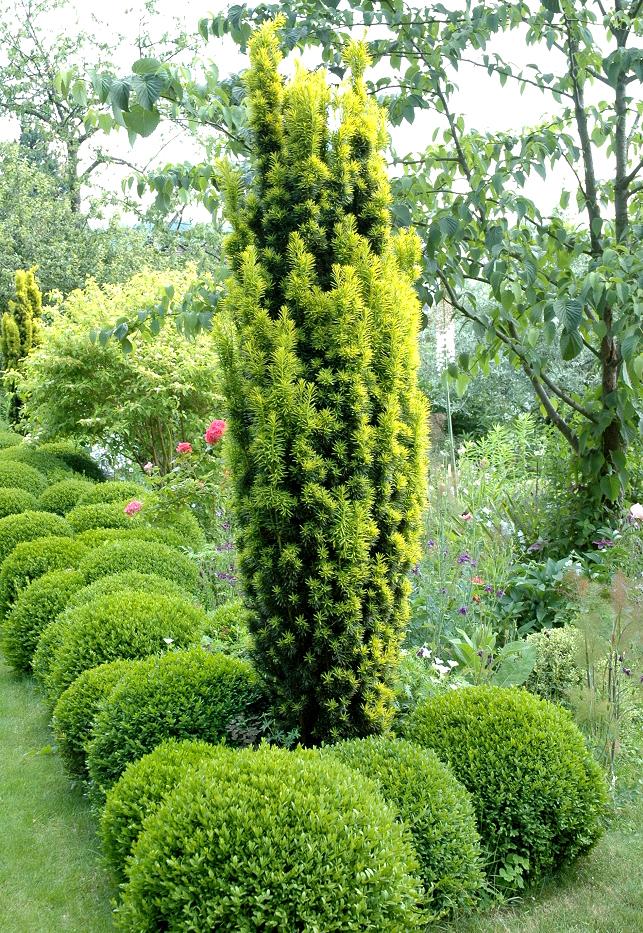 If planter et tailler ooreka for Plante 4 images 1 mot