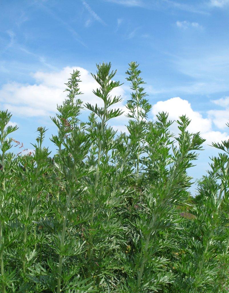 Euphorbe : planter et bouturer - Ooreka