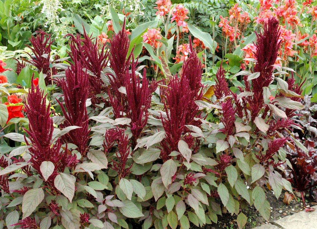 Plantation Pleine terre : La plante peut être plantée directement ...