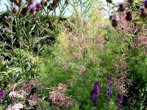Tamaris planter et tailler ooreka - Comment passer en floraison ...