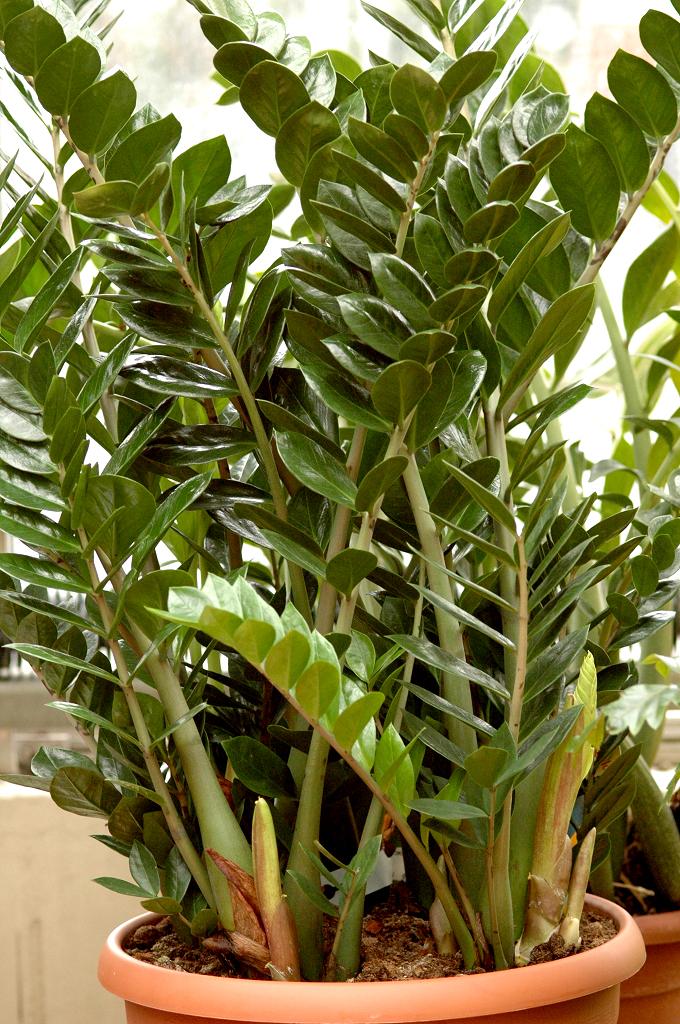 plante verte commencant par y