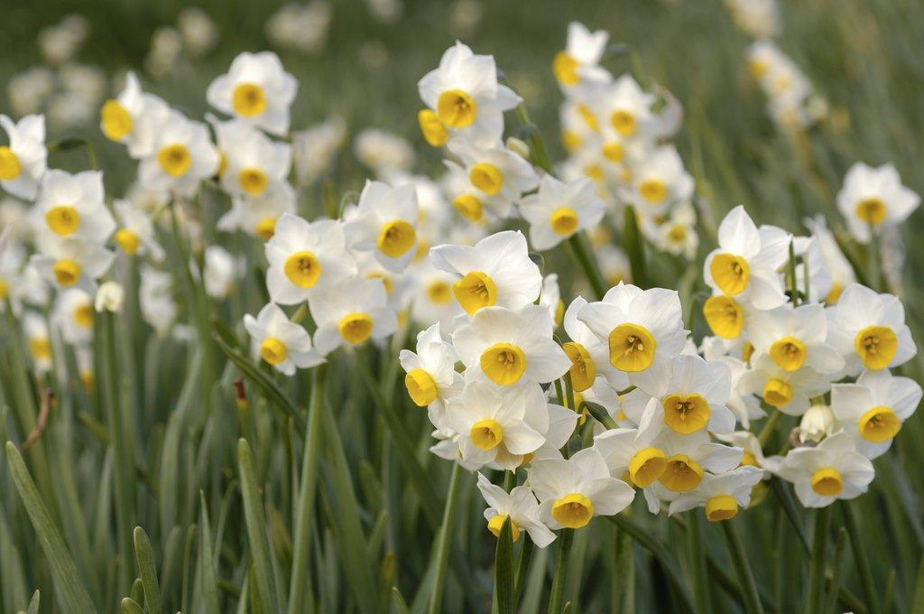 Fleur Commencant Par N Idee D Image De Fleur