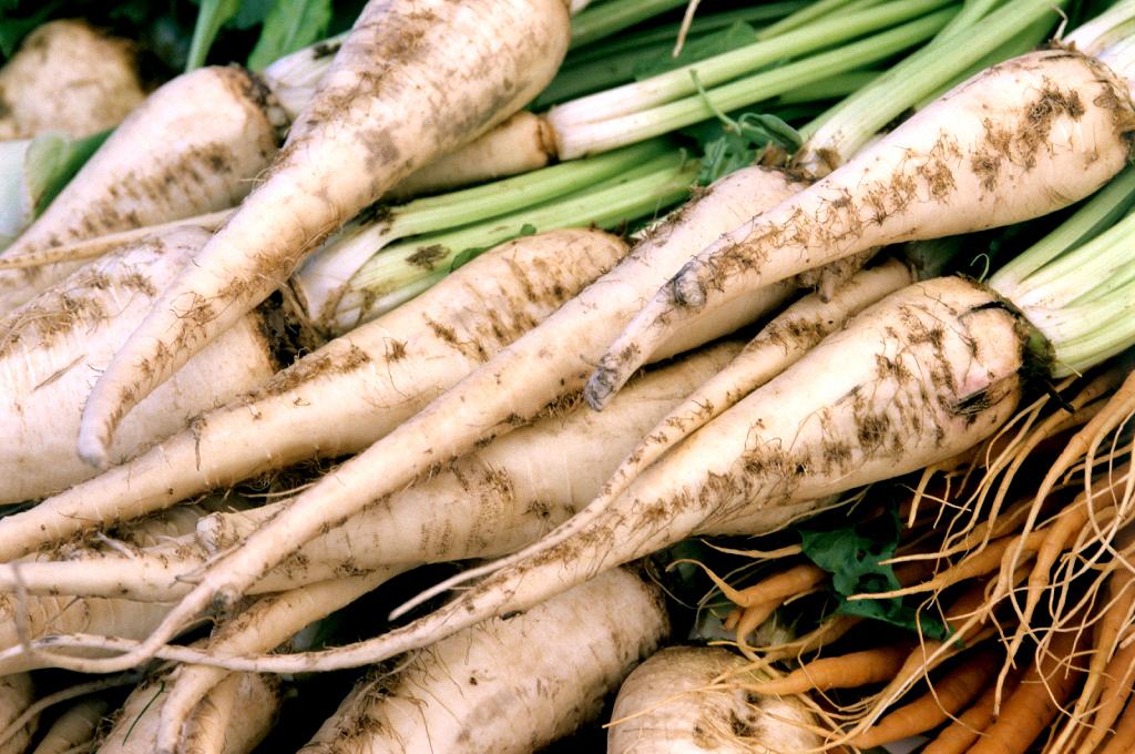 Panais : semer et planter - Ooreka