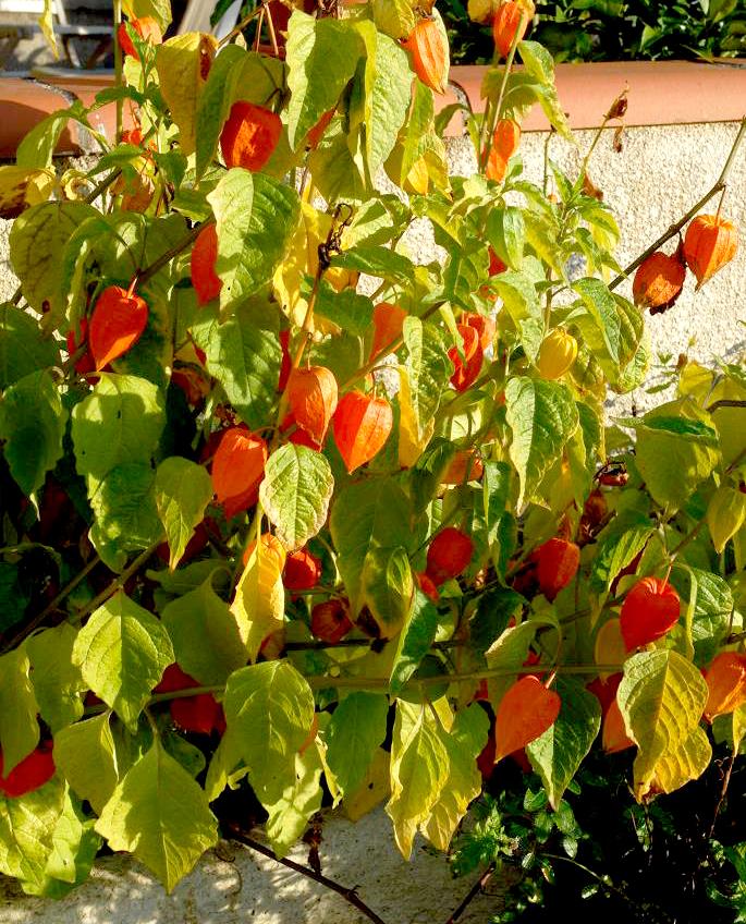 Plantation dans le jardin