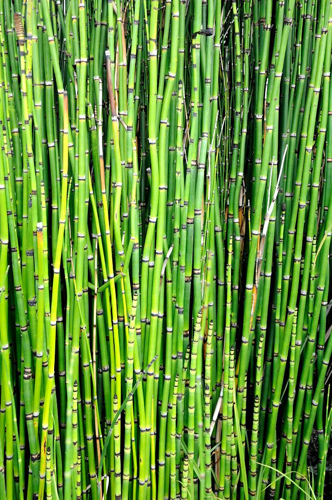 plante verte sur tige