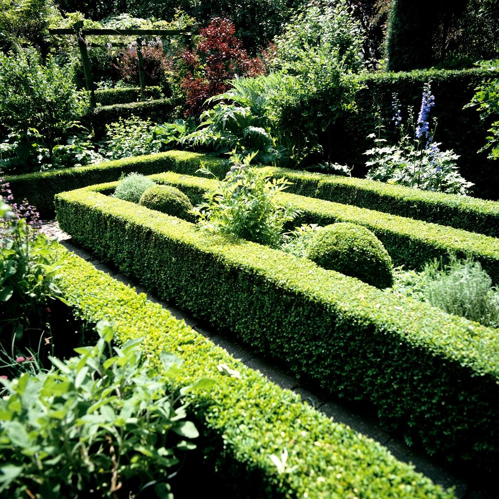 Buis planter et tailler ooreka for Plante pour bordure de terrasse