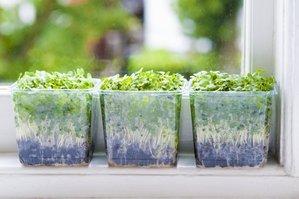 cresson de jardin semer et planter ooreka. Black Bedroom Furniture Sets. Home Design Ideas
