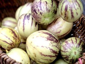Semis et plantation du pepino