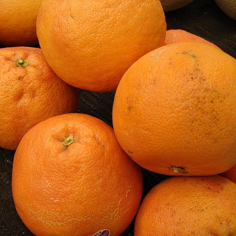 Grapefruit ou pomelo (Citrus x paradisi) Pamplemousse rosé