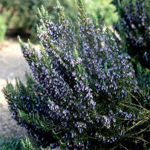 10 plantes qui attirent les énergies positives 3f9r03qw92as4ogko8so4kg4s